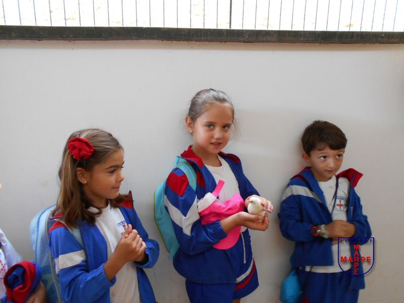 1_prim_escuela_los_olivos02